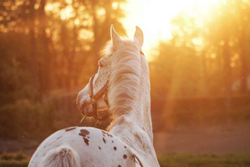 Paard in zon